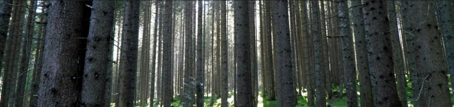 Le Taie i legni di qualità del Cadore